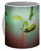 Spiny Oak Slug Moth 3 Coffee Mug