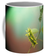 Spiny Oak Slug Moth 6 Coffee Mug