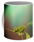 Spiny Oak Slug Moth 8 Coffee Mug