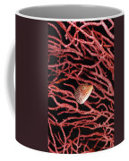 Spotted Boxfish Hides In Red Sea Fan Coffee Mug by James Forte