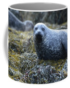 Spotted Coat Of A Harbor Seal Coffee Mug