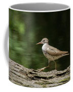 Spotted Sandpiper Coffee Mug
