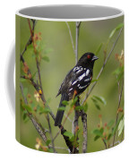 Spotted Towhee Coffee Mug