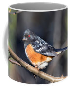Spotted Towhee Portrait Coffee Mug