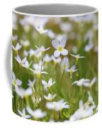 Spring Beauties Coffee Mug