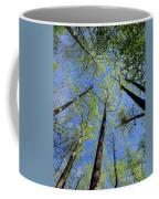 Spring Canopy Skylight Coffee Mug