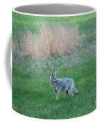 Spring Coyote  Coffee Mug