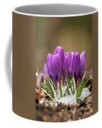 Spring Crocus Coffee Mug