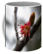 Spring Flower Closeup 2 Coffee Mug