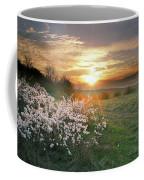 Spring Flowers. Coffee Mug