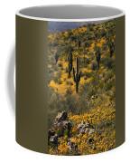Spring In The Sonoran Desert  Coffee Mug