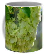 Spring Is In The Air -vines Botanical Garden Coffee Mug