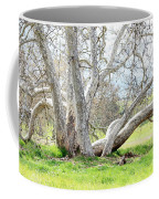 Spring Sycamore Tree Coffee Mug