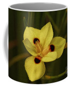 Spring Time In Florida Coffee Mug