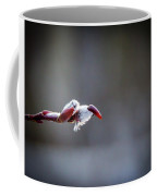 Spring Time Pussy Willow Coffee Mug