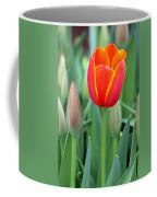 Spring Tulips 211 Coffee Mug