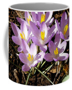 Springtime Crocuses  Coffee Mug