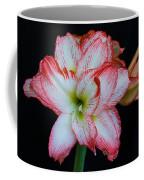 Springtime Florida Amaryllis Coffee Mug