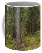 Spruce Forest  Coffee Mug