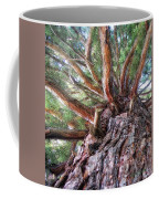 Squirrel Haven Coffee Mug