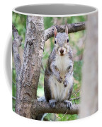 Squirrel Looking At Photographer And Waiting To Be Fed Coffee Mug