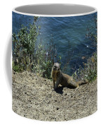 Squirrel Looking Back Over His Shoulder On The Coast Coffee Mug