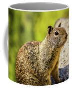 Squirrel On The Rock Coffee Mug