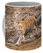 Stalking Tiger - Bengal Coffee Mug