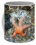 Starfish Running Coffee Mug