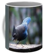 Stellars' Jay Feeding Coffee Mug