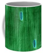 Stomata In A Green Onion Leaf, Esem Coffee Mug