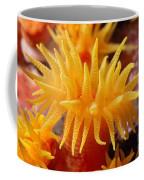 Stony Cup Coral Coffee Mug