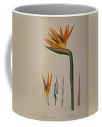 Strelitzia Reginae Coffee Mug by Pierre Joseph Redoute