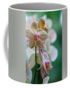 Striped Orchid 1 Coffee Mug