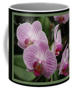 Striped Orchids With Border Coffee Mug