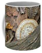Striped Shelf Fungus - Basidiomycota Coffee Mug