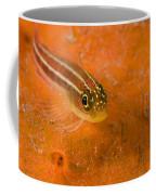 Striped Triplefin Helcogramma Striata Coffee Mug