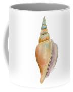 Strombus Vittatus Shell Coffee Mug by Amy Kirkpatrick