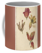 Studies Of Four Tulips, Elias Van Nijmegen, C. 1700 - C. 1725 Coffee Mug