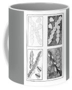 Study In Arrowheads Coffee Mug