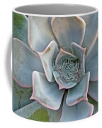 Succulent In Pastels Coffee Mug