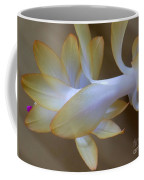 Succulent Season Coffee Mug