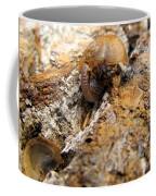 Sugarloaf Snail Coffee Mug