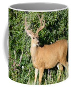 Summer Buck Coffee Mug