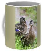 Summer Mallard Couple Coffee Mug