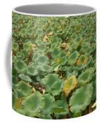 Summer Palace Lotus Pond Coffee Mug