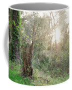 Sun Shining Through Trees In A Mysterious Forest Coffee Mug
