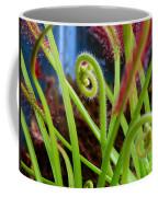Sundew Drosera Capensis 3 Coffee Mug