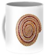Sundial Shell Coffee Mug
