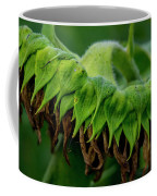 Sunflower 2017 1 Coffee Mug